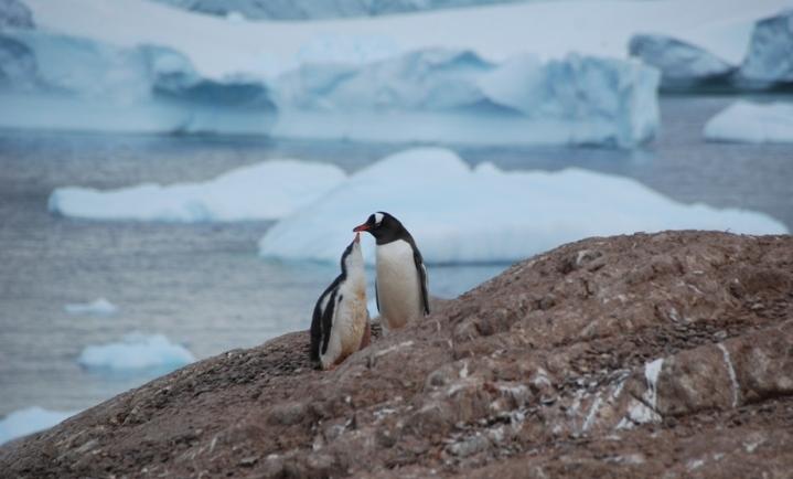 Manta_Etelämanner pingviinit